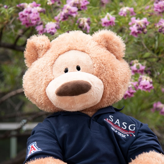 placeholder photo of SASG mascot Bearnard